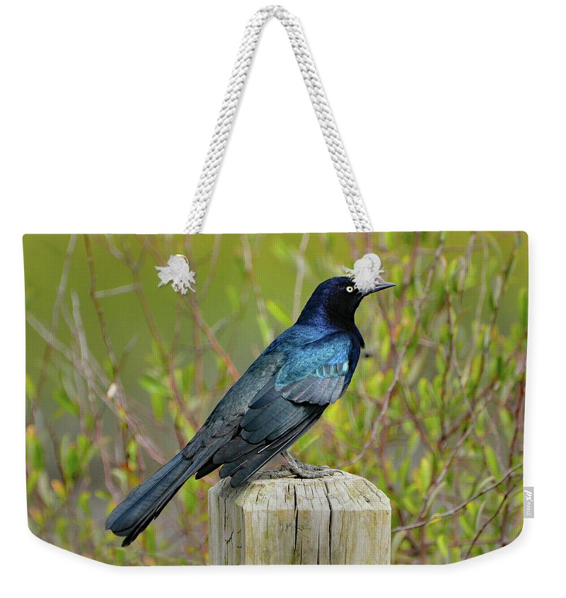 Grackle Weekender Tote Bag featuring the photograph Boat Tailed Grackle by Jerry Griffin