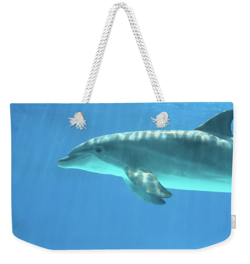 Underwater Weekender Tote Bag featuring the photograph Bottlenose Dolphin by Anzeletti