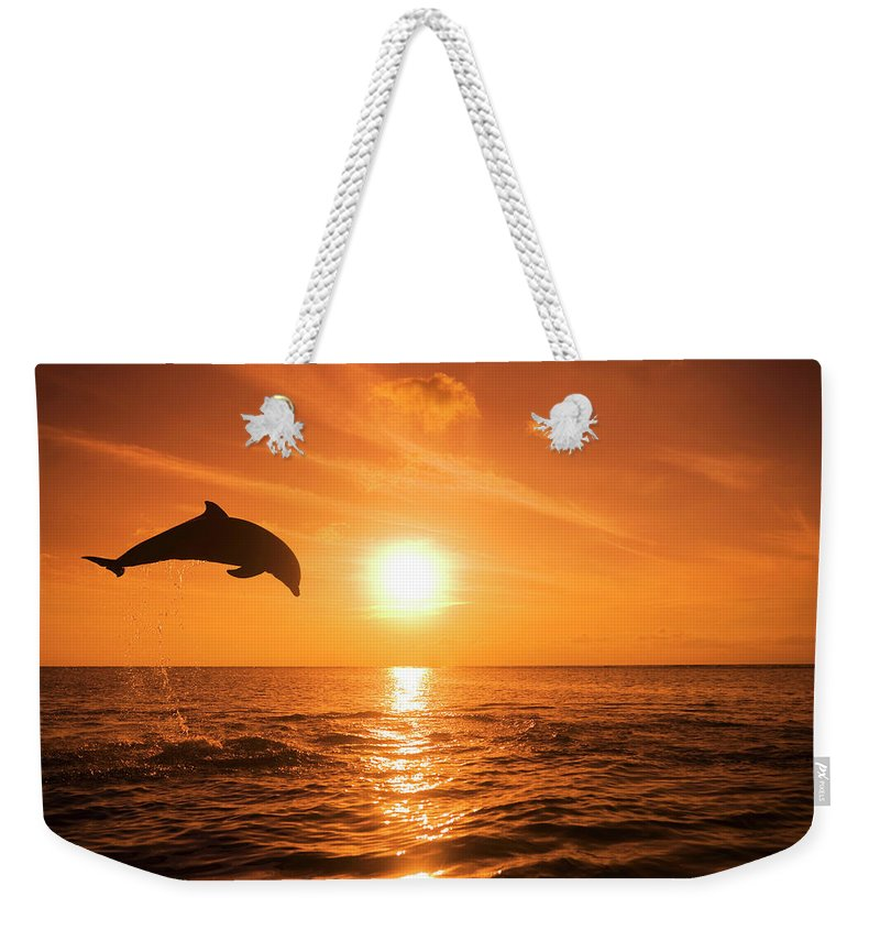 Orange Color Weekender Tote Bag featuring the photograph Bottlenose Dolphin Tursiops Truncatus by Rene Frederick