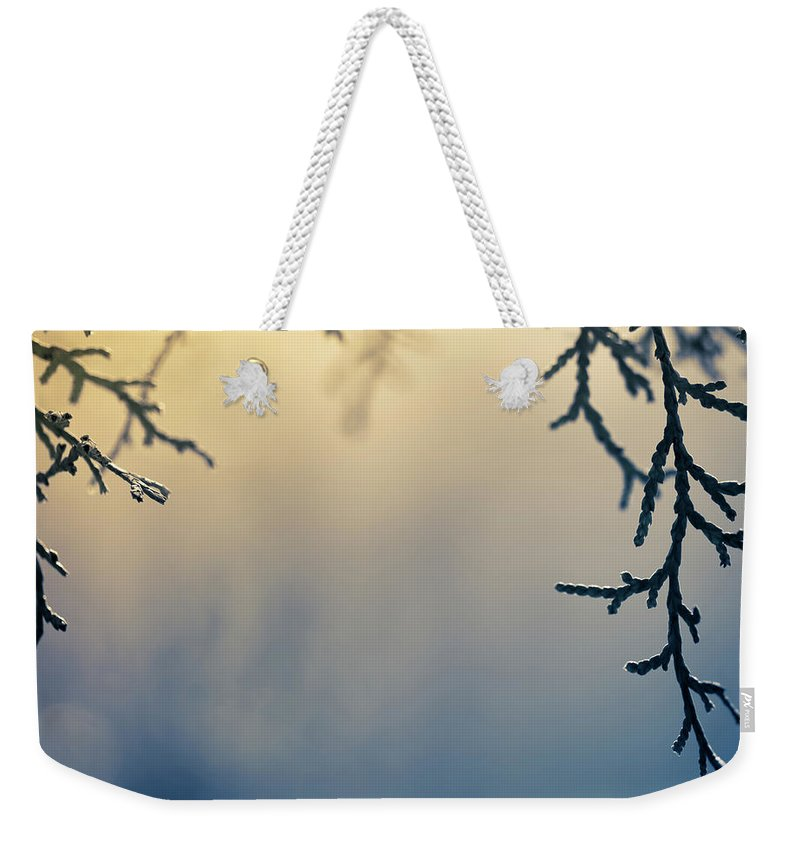 Saturated Color Weekender Tote Bag featuring the photograph Branch Of Pine Tree by Jeja