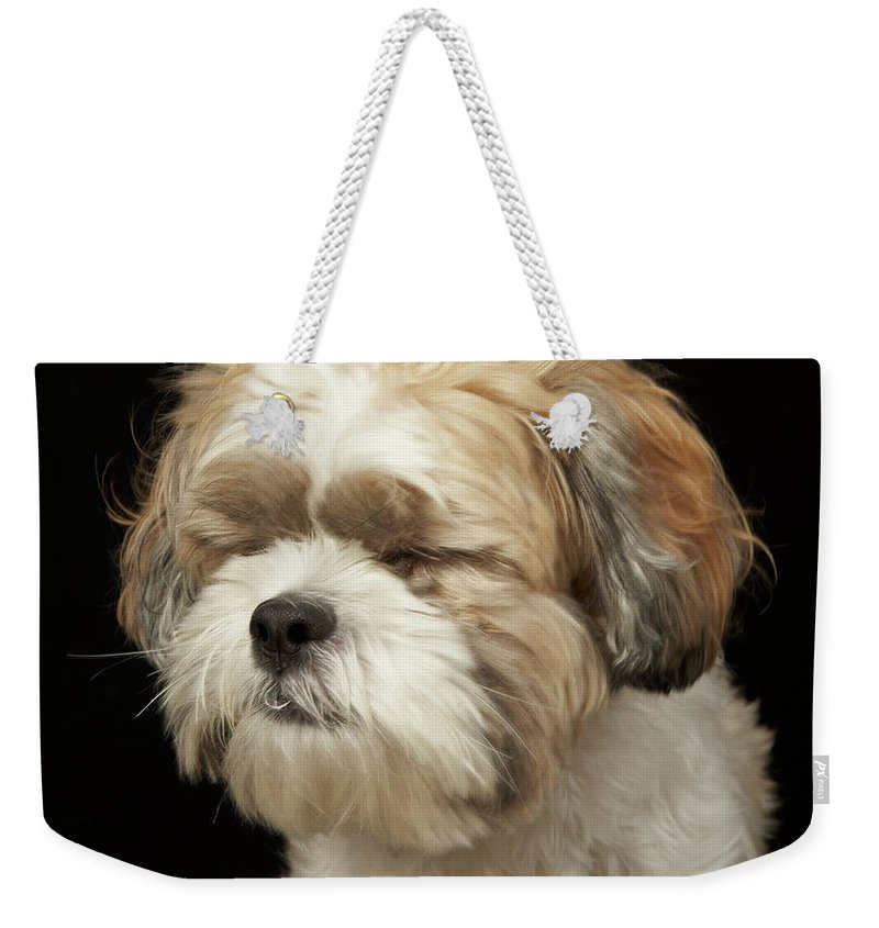 Pets Weekender Tote Bag featuring the photograph Brown And White Shih Tzu With Eyes by M Photo