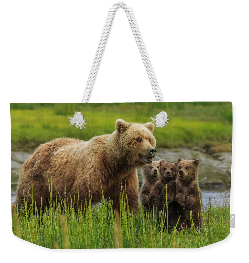 Brown Bear Weekender Tote Bag featuring the photograph Brown Bear Sow And Cubs, In The Long by Mint Images - Art Wolfe