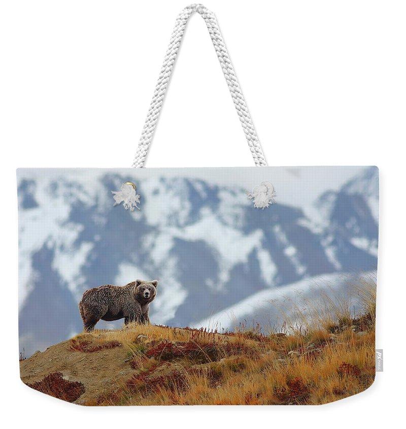 Brown Bear Weekender Tote Bag featuring the photograph Brown Bear by Zahoor Salmi