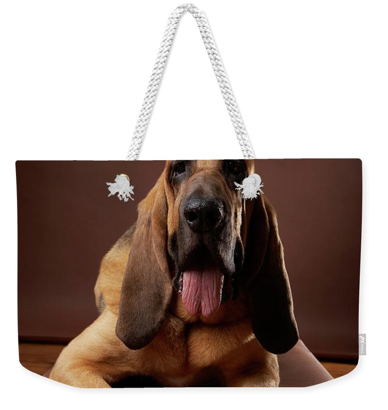 Pets Weekender Tote Bag featuring the photograph Brown Bloodhound Dog Lying On Bench by Chris Amaral