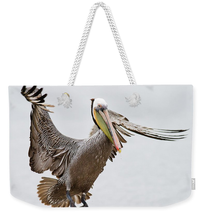 Oakland Weekender Tote Bag featuring the photograph Brown Pelican by By Davor Desancic