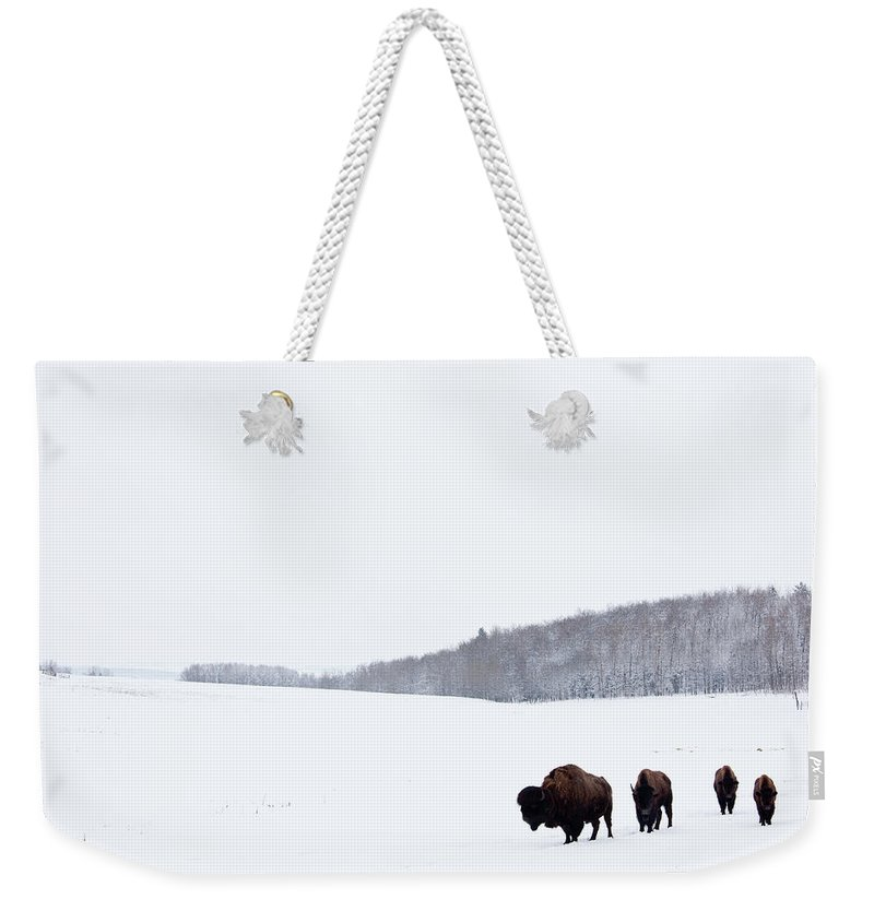 Scenics Weekender Tote Bag featuring the photograph Buffalo Or Bison On The Plains In Winter by Imaginegolf