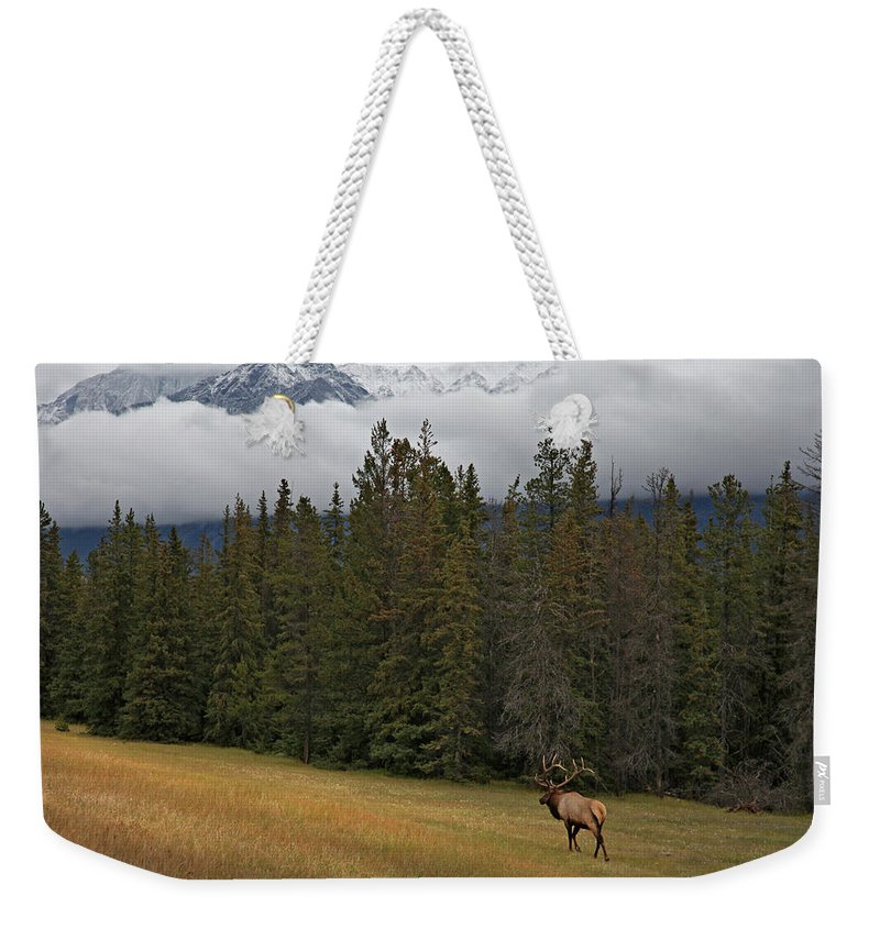 Snow Weekender Tote Bag featuring the photograph Bull Elk In Meadow With Snow Covered by Guy Crittenden