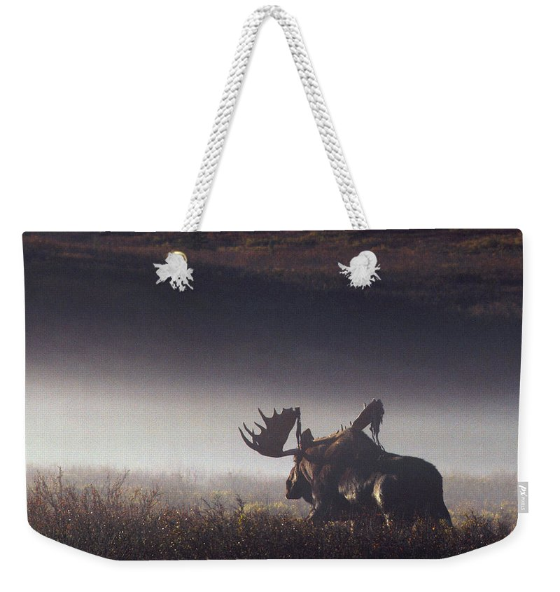 Majestic Weekender Tote Bag featuring the photograph Bull Moose Alces Alces Walking Through by Johnny Johnson