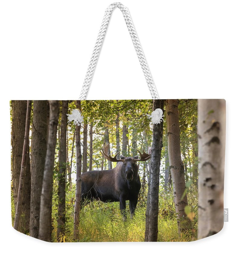 Alaska Weekender Tote Bag featuring the photograph Bull Moose In Fall Forest by Scott Slone