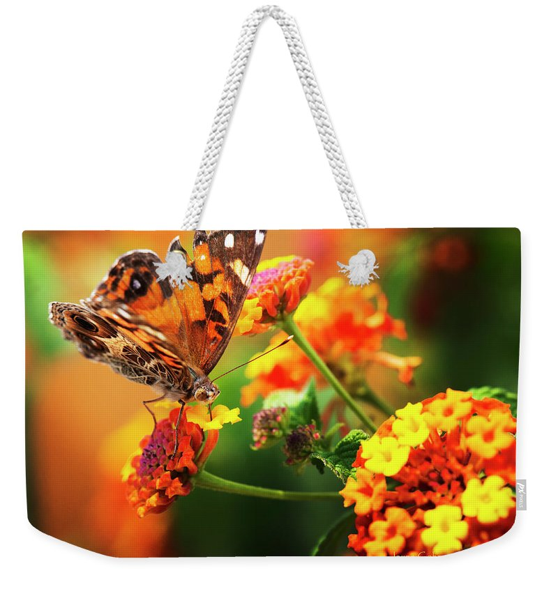 Butterfly Weekender Tote Bag featuring the photograph Butterfly Bliss by Jayne Gohr