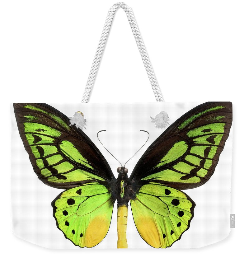 White Background Weekender Tote Bag featuring the photograph Butterfly Lepidoptera With Green, Black by Flamingpumpkin