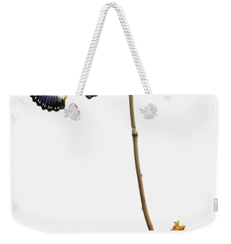 White Background Weekender Tote Bag featuring the photograph Butterfly Transformation by David Arky