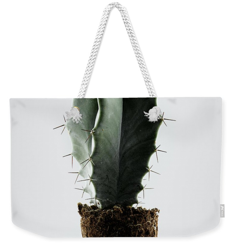 White Background Weekender Tote Bag featuring the photograph Cactus On White Background by Chris Stein