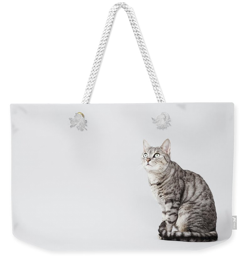 Pets Weekender Tote Bag featuring the photograph Cat Looking Up by Lisa Stirling