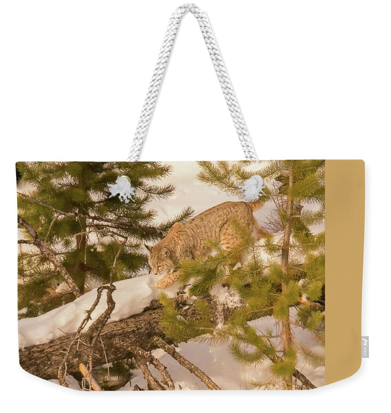 Cat Walk Weekender Tote Bag featuring the photograph Cat Walk by Priscilla Burgers