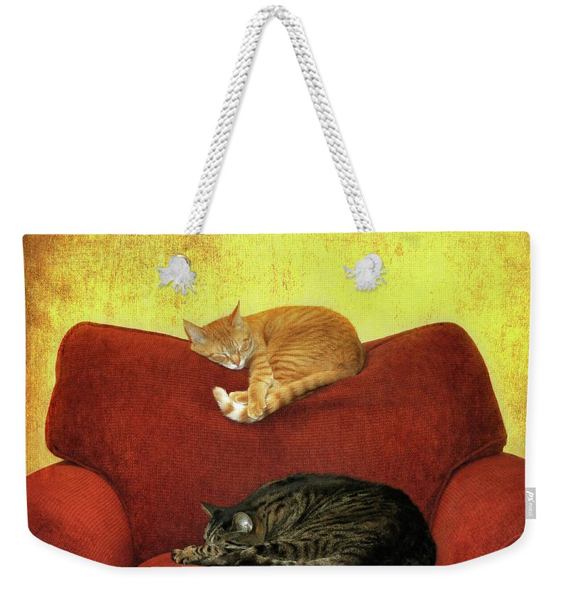 Pets Weekender Tote Bag featuring the photograph Cats Sleeping On Sofa by Nancy J. Koch, Pittsburgh, Pa