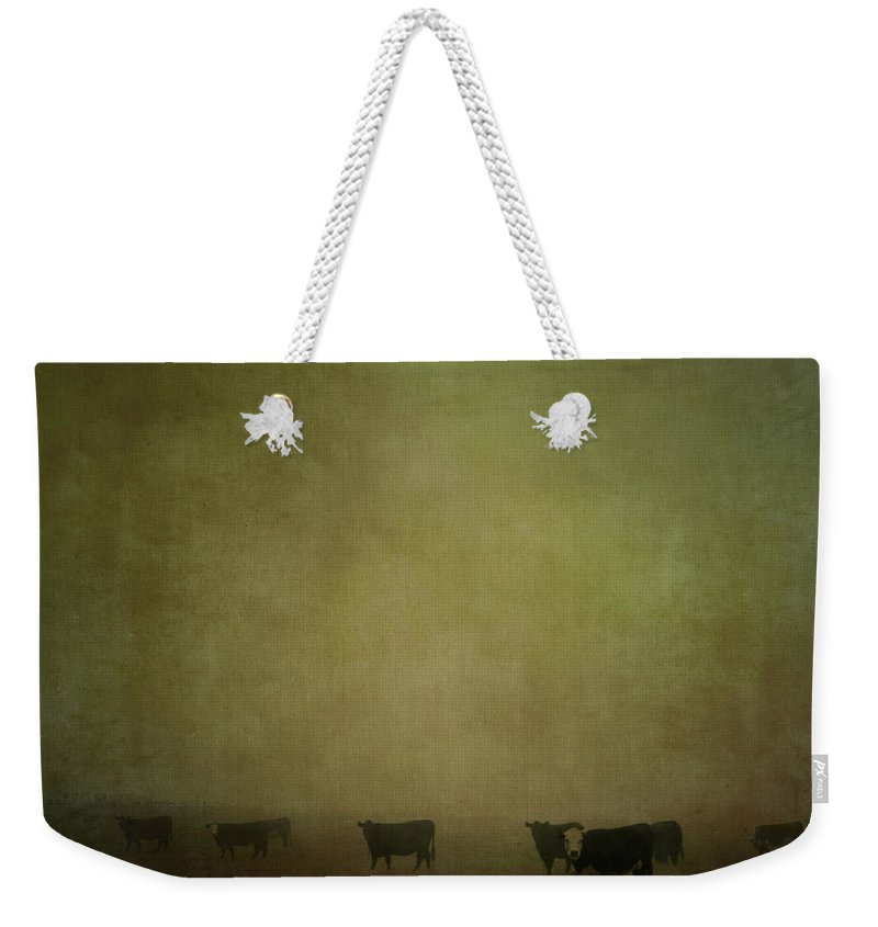 Pets Weekender Tote Bag featuring the photograph Cattle In The Mist by Jill Ferry