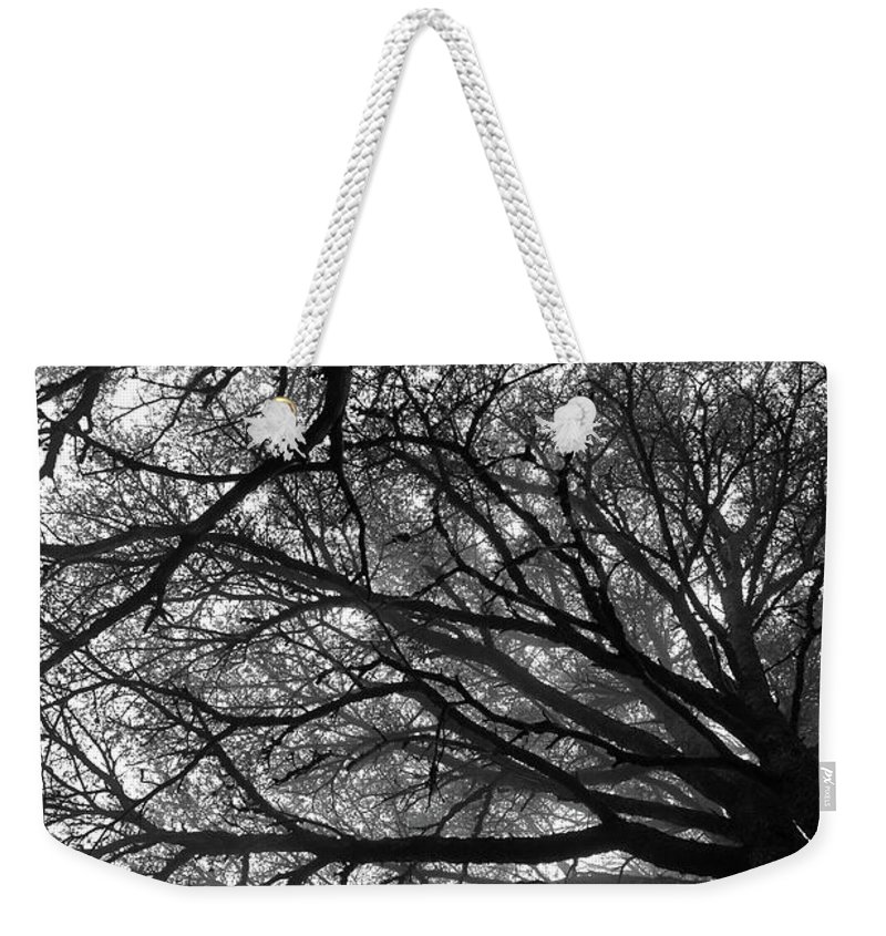 Cedar Weekender Tote Bag featuring the photograph Cedars In The Mist by Dia Karanouh