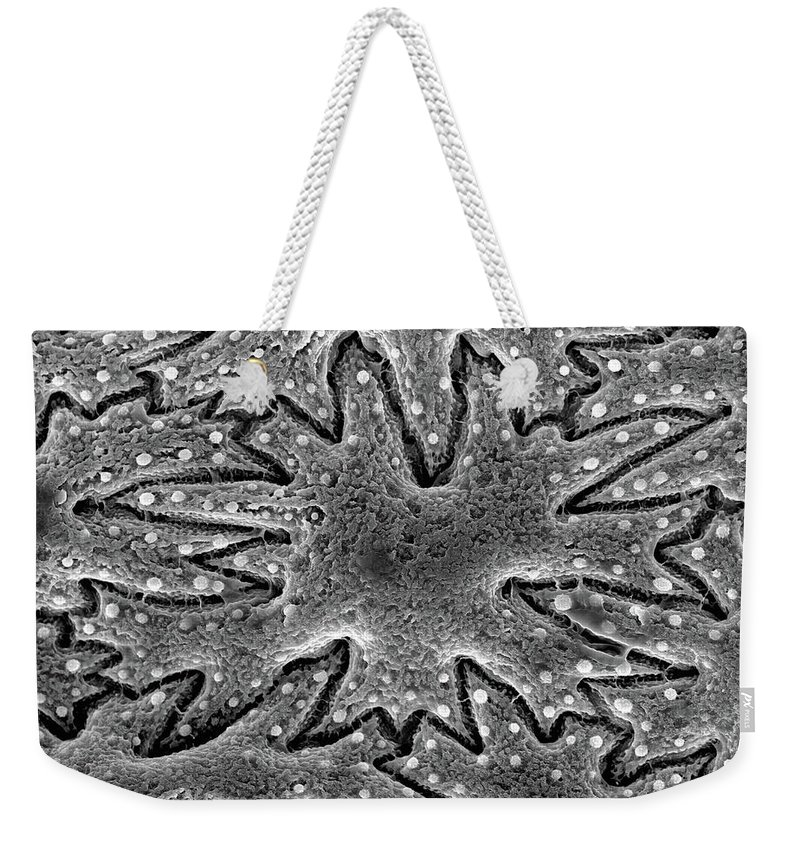 Microscope Weekender Tote Bag featuring the photograph Celery Seed, Sem by Sheri Neva