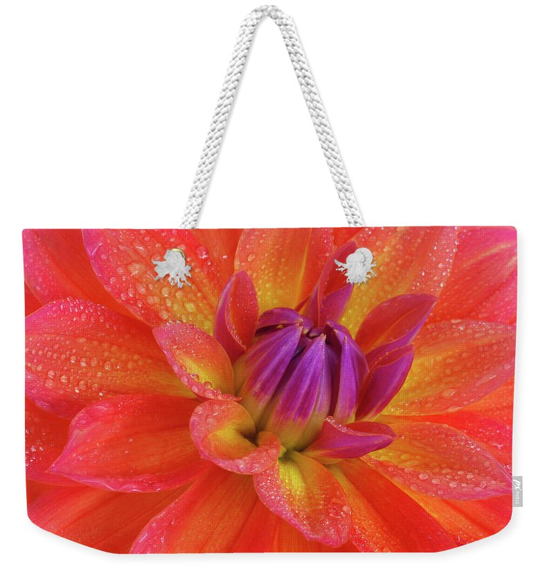 Orange Color Weekender Tote Bag featuring the photograph Centre Of Brightly Coloured Dahlia by Rosemary Calvert
