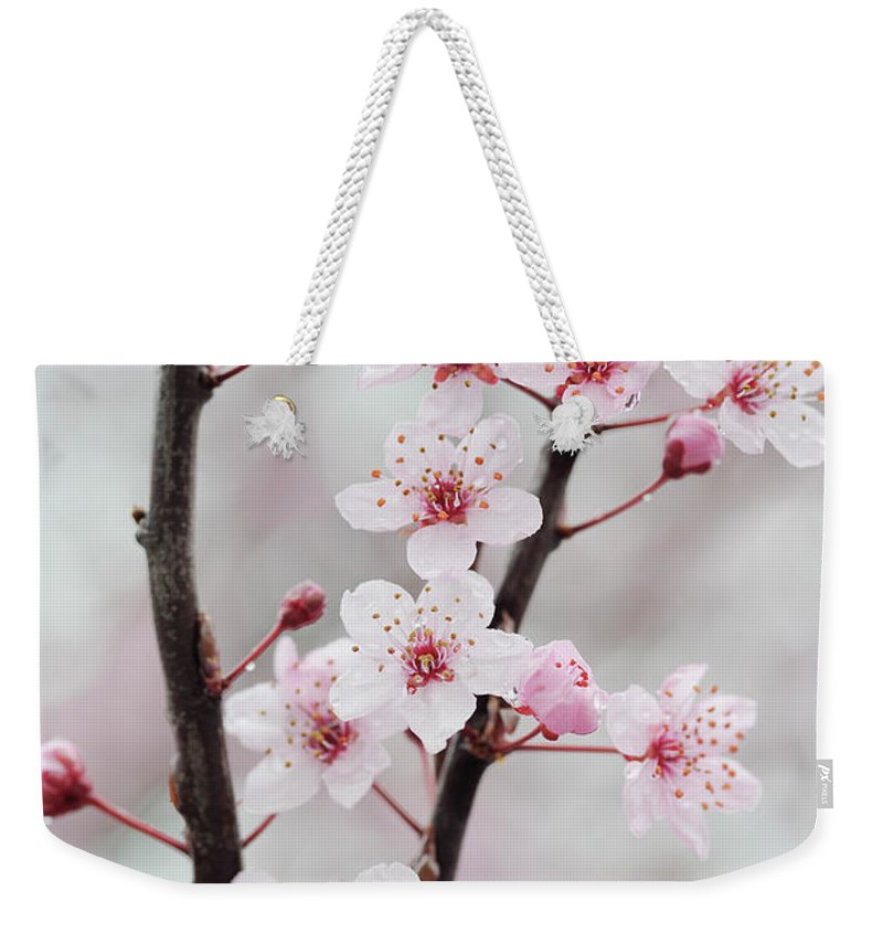 Cherry Weekender Tote Bag featuring the photograph Cherry Plum Purple Plum Pink Flowers On by Martin Ruegner