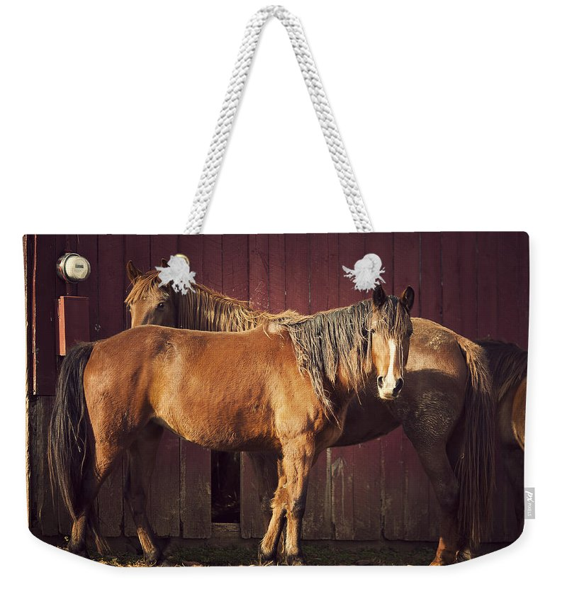 Horse Weekender Tote Bag featuring the photograph Chestnut Horses by Thepalmer