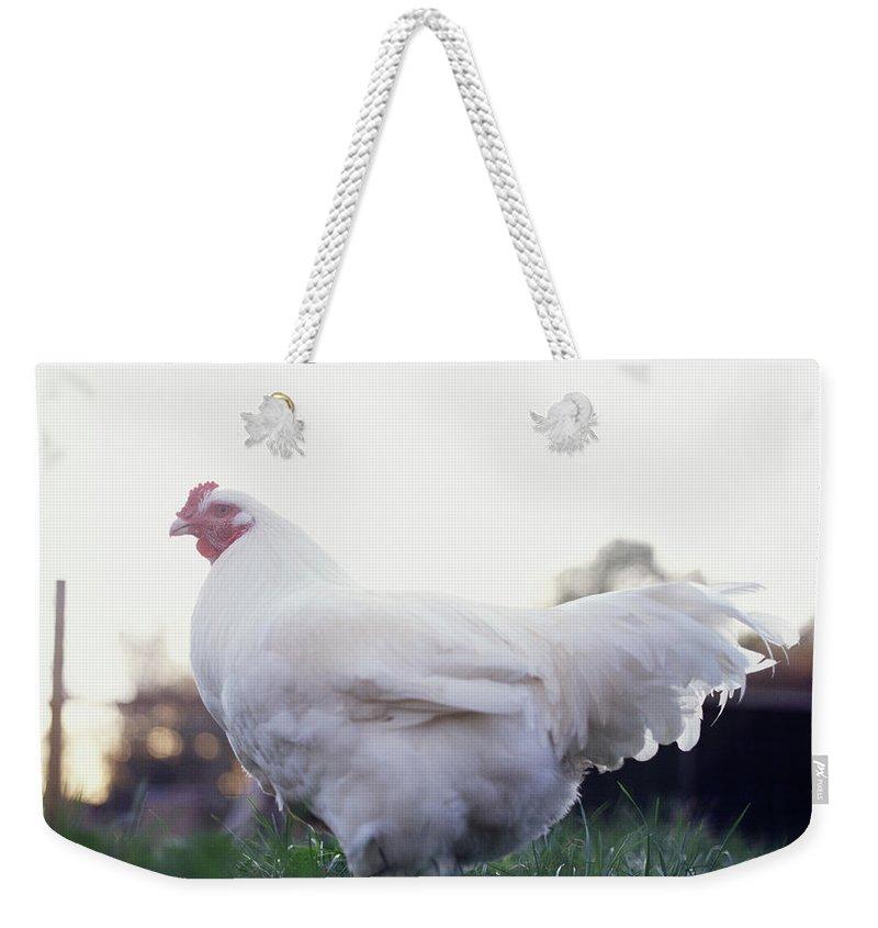 Grass Weekender Tote Bag featuring the photograph Chicken by Matt Carr