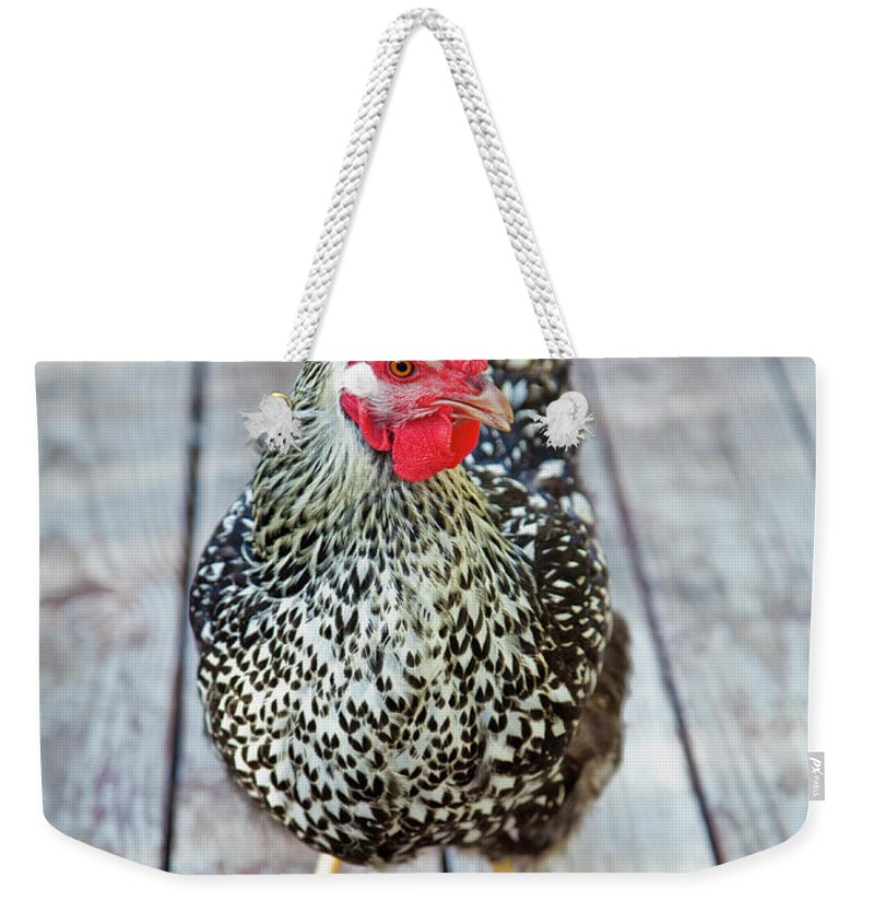 Pets Weekender Tote Bag featuring the photograph Chicken On Wood Deck by Grove Pashley