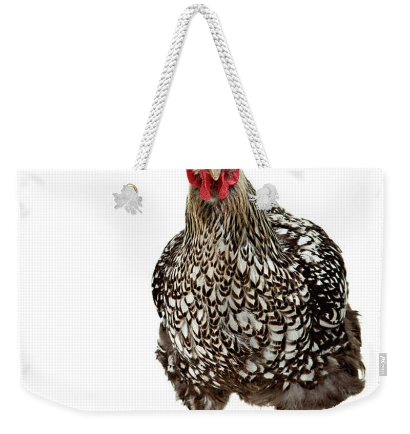 White Background Weekender Tote Bag featuring the photograph Chicken Splits Isolated On White by Debbismirnoff