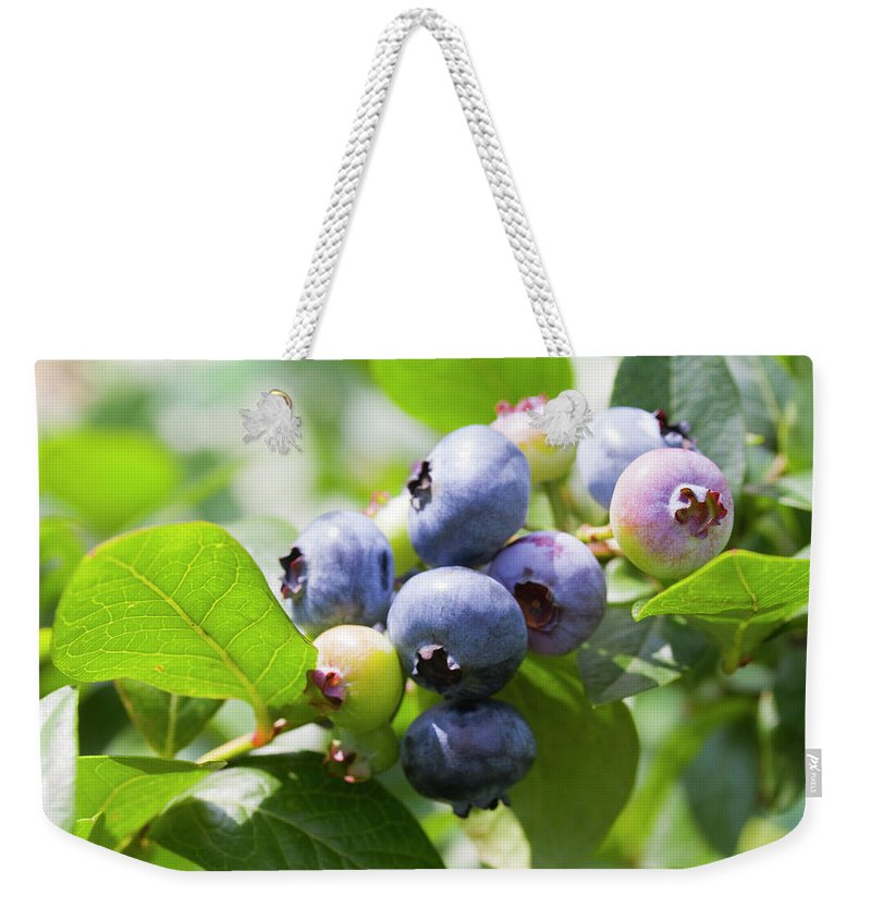 Yamanashi Prefecture Weekender Tote Bag featuring the photograph Close-up Of Blueberry Plant And Berries by Daisuke Morita