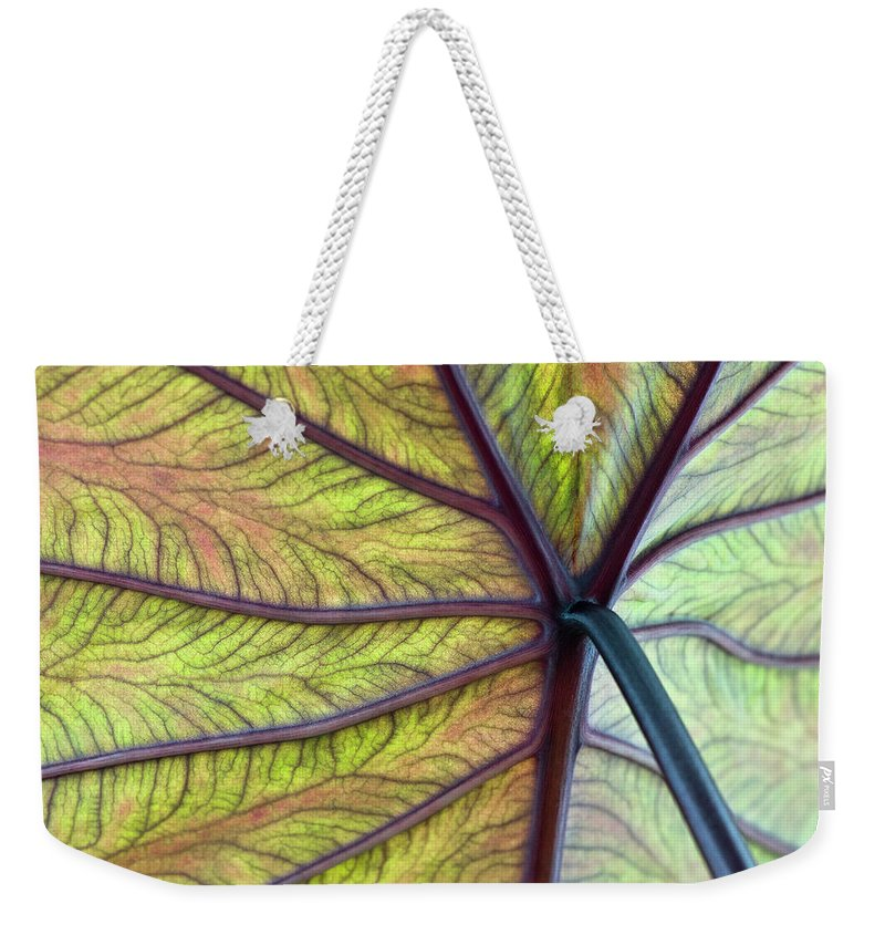 Voodoo Doll Weekender Tote Bag featuring the photograph Close Up Of Colocasia Esculenta Leaf by Deb Casso