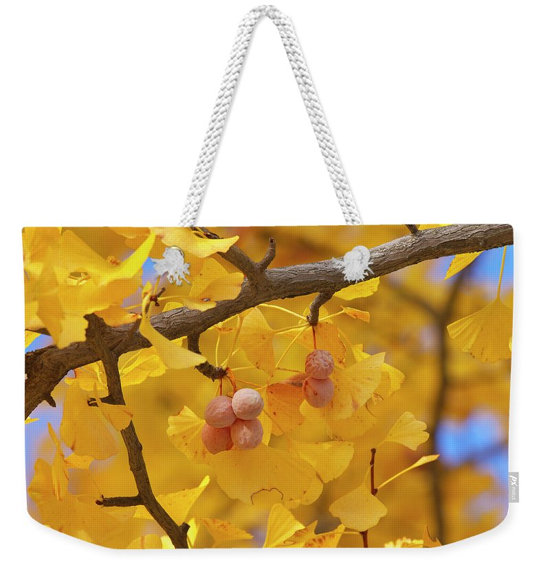 Ginkgo Tree Weekender Tote Bag featuring the photograph Close-up Of Gingko Tree In Autumn by Wada Tetsuo/a.collectionrf