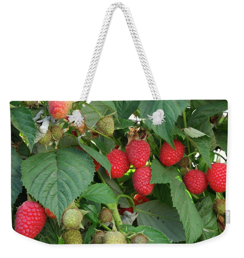 Non-urban Scene Weekender Tote Bag featuring the photograph Close-up Ripening Organic Raspberries by Gomezdavid