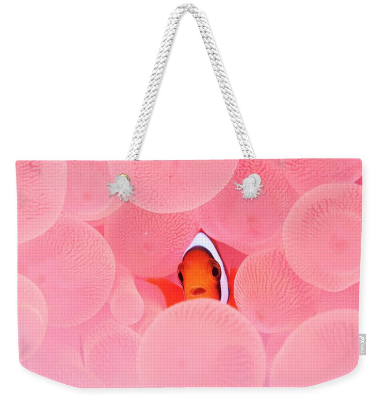 Underwater Weekender Tote Bag featuring the photograph Clownfish In Corals by Yusuke Okada/a.collectionrf