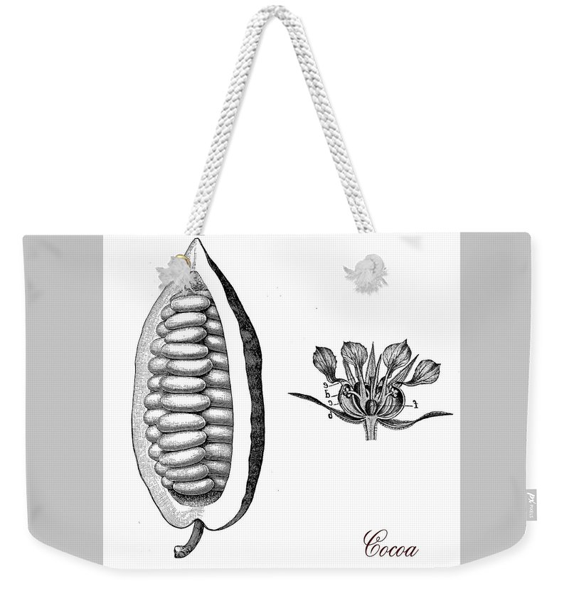 Cocoa Bean Weekender Tote Bag featuring the digital art Cocoa Bean, Botanical Vintage Engraving by Luisa Vallon Fumi