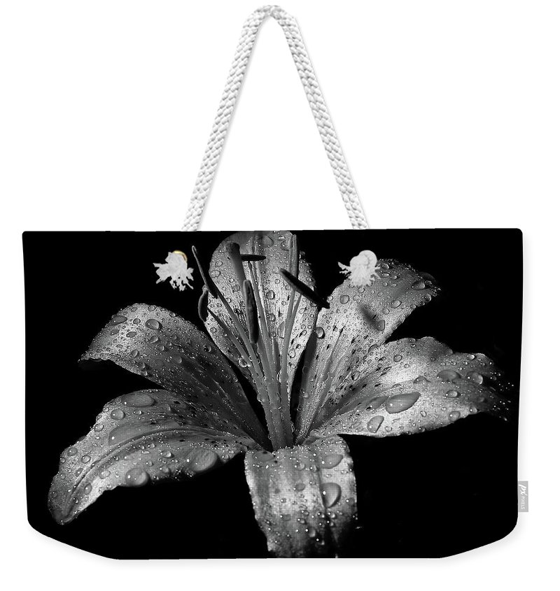 Black Background Weekender Tote Bag featuring the photograph Collection by Photograph By Ryan Brady-toomey