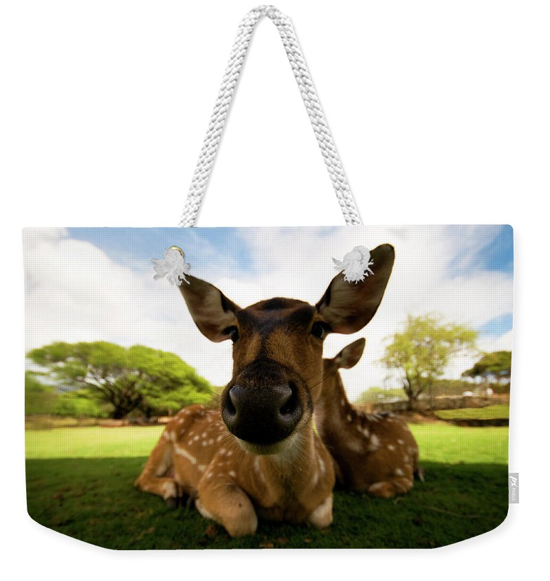 Mountain Pass Weekender Tote Bag featuring the photograph Colseup Of A Dear by Ian Payne
