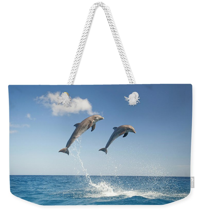 Aerodynamic Weekender Tote Bag featuring the photograph Common Bottlenose Dolphins Tursiops by Mike Hill