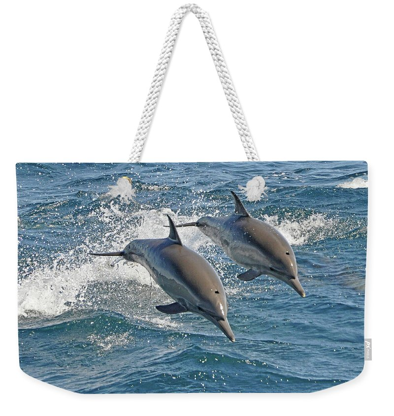 Diving Into Water Weekender Tote Bag featuring the photograph Common Dolphins Leaping by Tim Melling