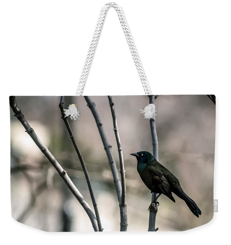 Animal Themes Weekender Tote Bag featuring the photograph Common Grackle by By Ken Ilio