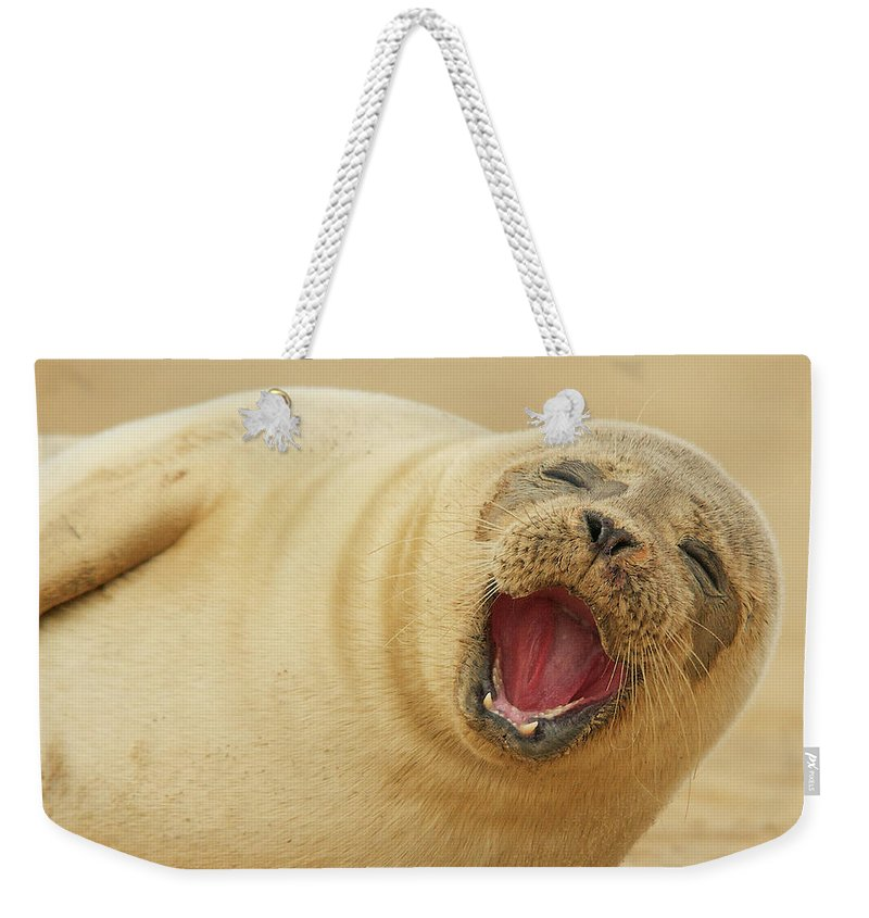 Animal Themes Weekender Tote Bag featuring the photograph Common Seal by Copyright Alex Berryman