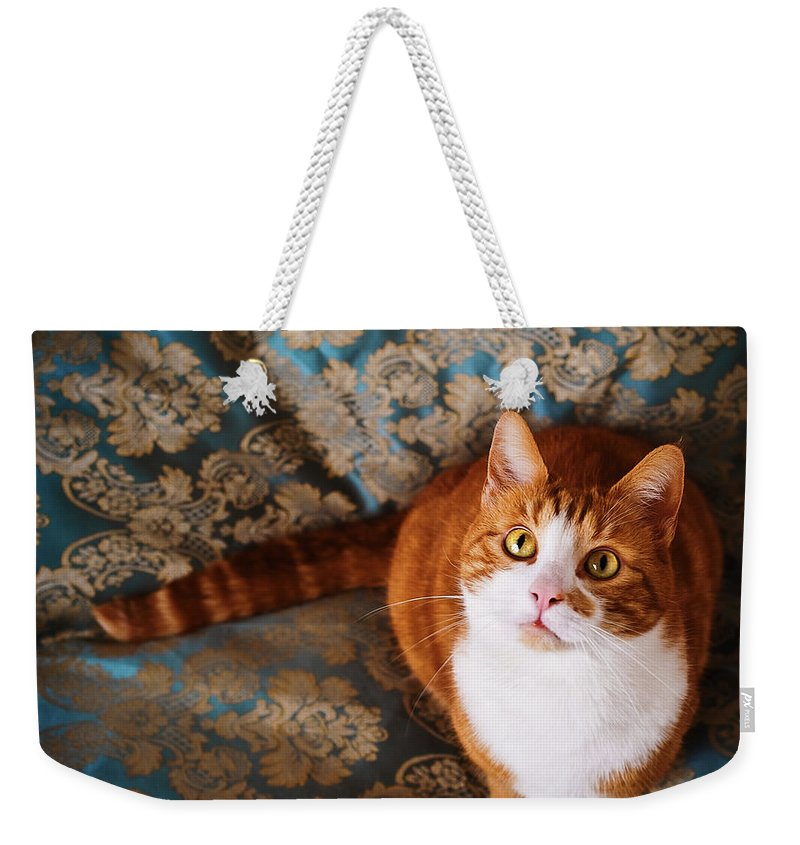 Pets Weekender Tote Bag featuring the photograph Cute Cat Named Nisse by Knape