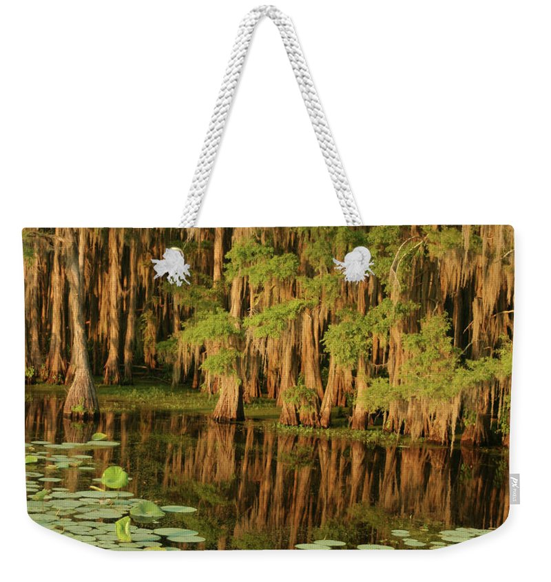 Outdoors Weekender Tote Bag featuring the photograph Cypress In The Lake by Jlfcapture
