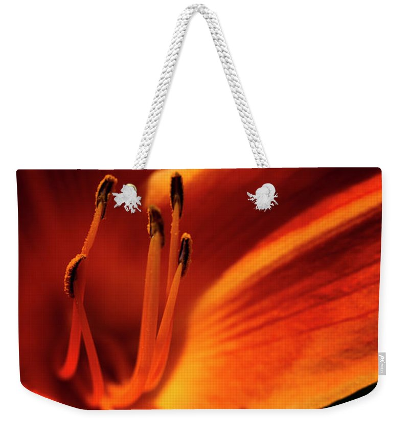 Christopher Farm And Gardens Weekender Tote Bag featuring the photograph Day Lily Delight by Jayne Gohr