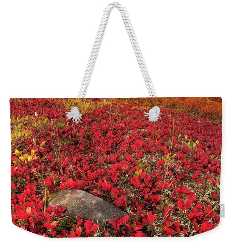 Scenics Weekender Tote Bag featuring the photograph Denali National Park Fall Colors by Kevin Mcneal