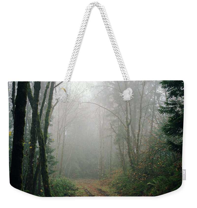 Tranquility Weekender Tote Bag featuring the photograph Dirt Road Leading Through Foggy Forest by Danielle D. Hughson