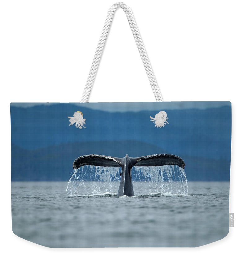 Diving Into Water Weekender Tote Bag featuring the photograph Diving Humpback Whale, Alaska by Paul Souders