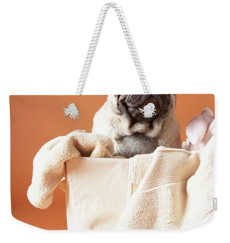 Pets Weekender Tote Bag featuring the photograph Dog In Basket by Chris Amaral