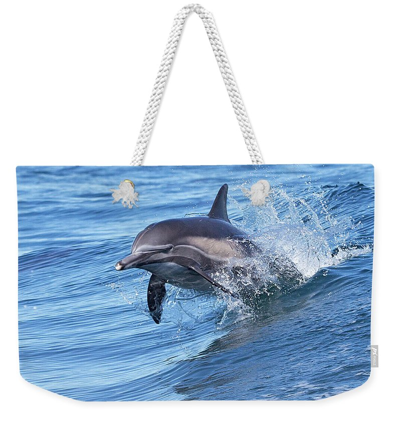 Wake Weekender Tote Bag featuring the photograph Dolphin Riding Wake by Greg Boreham (treklightly)