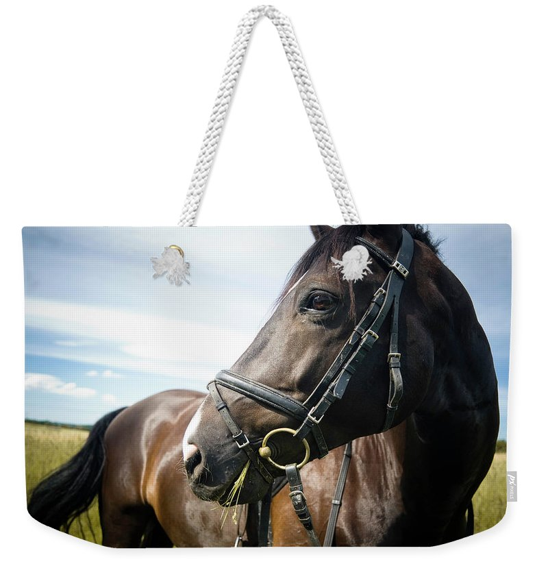 Horse Weekender Tote Bag featuring the photograph Dont Look Back by Pixalot